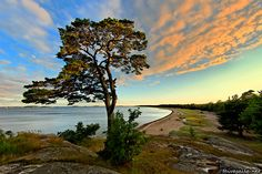 Hanko: A summer evening's view towards the headland of Tulliniemi, the southernmost point of the Finnish mainland. Family Tree For Kids, Scandinavian Countries, Nordic Design, Types Of Art, Ciel, Country Roads, Landscape, Places, Father