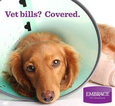Dont let expensive vet bills come between you and the best care for your pet. Get a free quote from Embrace Pet Insurance today. Pet Insurance Reviews, Best Pet Insurance, Life Insurance, Health Insurance, Baby Dogs, Dogs And Puppies, Embrace Pet Insurance, Animals And Pets, Cute Animals