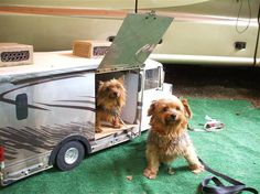 Cute Canine Camper for Canine Companion - Go Travels Plan Cool Campers, Happy Campers, Mini Dogs, Caravan, Your Pet, Dogs And Puppies, Rv Living, Mobile Living, Tiny Trailers