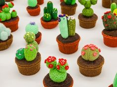 Click to enlarge image knitted-cacti-2.jpg