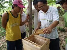 トウヨウミツバチの近代養蜂は「あたりまえ」: 花を増やそう!みつばち百花
