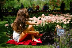 The Tulip Gardens, Holland - The Londoner