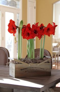She'll get year-long joy from this Amaryllis Gift Set, which includes three Red Lion bulbs, soil, decorative moss, and a wooden crate.