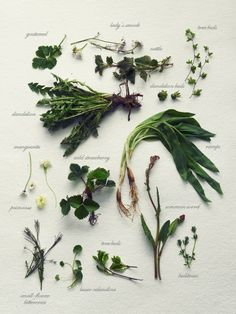 www.editionlocal.com >> Fork and Flower: wild herb gathering