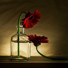 Image detail for -Still life photography ideas 59 575x575 35 Best Examples of Still Life ...