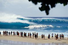 pipeline haleiwa oahu - My friends house was right there, watched many surf competitions and the local boys of course