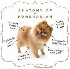 Pomeranian Adorableness Chart