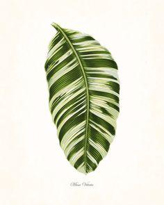 Vintage Botanical Tropical Leaf Series No. 1 - Canvas Art Print