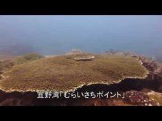 宜野湾 むらいさちポイント