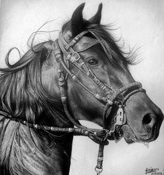 """ARTIST: Diogenes Dantas (diogenesdantas on DeviantART) ~ """"Cavalo"""" (Graphite)"""