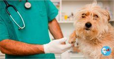 210 vacantes disponibles para veterinario Salario: Desde $ 737.717,00 más prestaciones de ley (Mensual) Región de Convocatoria:A nivel Nacional Fecha ... Ver Más ➥