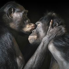 More-Than-Human-Tim-Flach-8