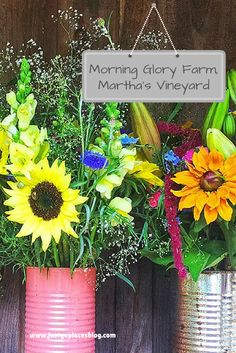 Morning Glory Farm in Edgartown in Martha's Vineyard sells the best farm fresh produce on the island from their farm stand. Known as the 'farm that feeds an island,' they also sell flowers, takeaway food and baked goods.