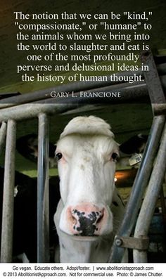 "For those that believe in ""humane"" meat or ""grass-fed beef"" and such there is no humane slaughter. Go vegan Reasons To Be Vegan, Vegan Facts, Vegan Quotes, Vegetarian Quotes, Evolution, Why Vegan, Stop Animal Cruelty, Vegan Animals, Believe"