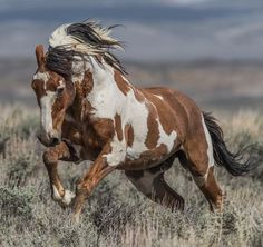 Looking for American Indian horse names? Here is a collection of native American Indian horse names, along with their meanings. Pretty Horses, Horse Love, Wilde Mustangs, Native American Horses, Indian Horses, Horse Names, Majestic Horse, Horse Photos, Pictures Of Horses