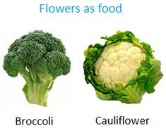 Food From Plants Roots As Vegetables How Plants Grow, Cool Plants, Cereals And Pulses, List Of Edible Flowers, How To Make Oil, Coffee Uses, Broccoli Cauliflower, Spring Plants, Coffee Plant