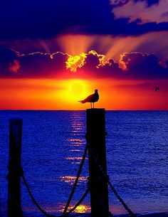 Beautiful..sunset bird on post blue water..orange sky