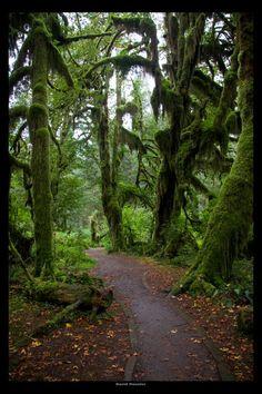 ✯ Hoh Rain Forest, Olympic Mountains, Washington