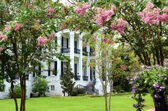 Nottoway Plantation & Resort, a member of Historic Hotels of America since dates back to Plantation Homes, Beautiful Homes, Beautiful Places, Louisiana Plantations, Revival Architecture, Southern Homes, Southern Charm, Southern Belle, New Orleans