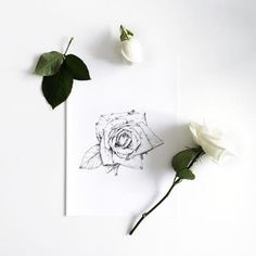 An overview of all the inkylines drawings and sketches. Drawing Sketches, Drawings, Sketching, Rose Sketch, Flower Outline, Tatting, How To Draw Hands, Hair Accessories, Ink