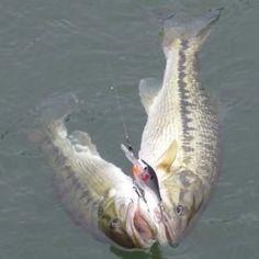 Fishhound.com.....A twofer! lol