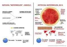 evolution of watermelon