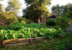 Permaculture by Irene Kightley #garden #squash #vegetable