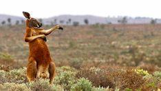 39 Funny/Cute Animal Pics - Gallery