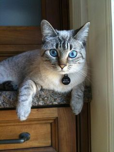 awesome eyes. awesome colour.