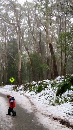 Free snow play on Mount Donna Buang