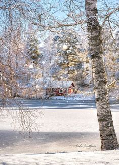 Winter Magic, Early Spring, Finland, Europe, Day, Bright, Outdoor, Winter, Beginning Of Spring