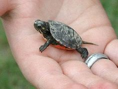 // awe look at the lil turtle!! So Cute!!