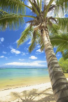 One of the most magic places on Earth is a small island beach. With brilliant beaches, warm water, and lush vegetation, this tiny green swath of land is my idea of paradise. Paradis Tropical, Coconut Palm Tree, Tropical Beaches, Exotic Beaches, Seen, Island Beach, Small Island, Beach Scenes, Tropical Paradise