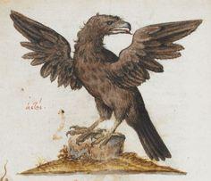 Eagle. 2nd quarter of the 16th century-3rd quarter of the 16th century Manuel Philes, De animalium proprietate British Library Burney MS 97 f2v