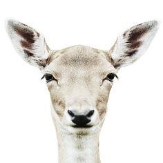 Deer Photo #deer #filter