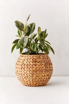 Tuck your blooming plants into this woven basket, available exclusively at Urban Outfitters. Rounded planter basket features a braided weave wrapping all around. Content + Care - Water lettuce leaf - Spot clean - Imported Size - Dimensions: x x Hanging Planters, Planter Pots, Indoor Planters, Fall Planters, Basket Planters, Indoor Garden, Rattan Planters, Indoor Plant Pots, Easy Garden