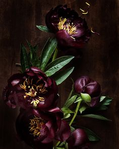 Color inspiration for fall wedding (though Peonies are unfortunately not fall blooms)