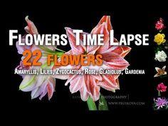 22 flowers in bloom.