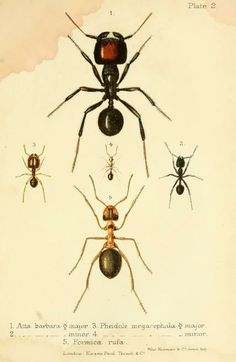 Ants, bees, and wasps by Lubbock, John, Sir, 1834-1913