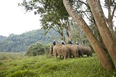 Elephant Bath Time In The River, Anantara Golden Triangle, Chiang Saen, Chiang Rai, Thailand.