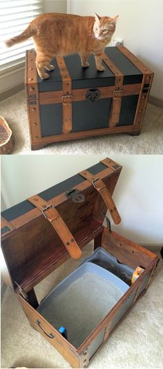 Litter Box Solution - I recently moved and I was going to have to keep the litter box for my two kitties in my living room. One day while wandering through Hobby Lobby I had an idea. Staring at me from across the store were these trunks on sale. I bought one, took it home and used a simple jig saw to cut a hole in the back. All I did was add a litterbox. Even my chunky boy cat Giacomo can get in and out with ease!