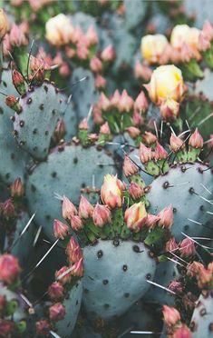 Cactus Photography, Bohemian Print, Southwest Print, Desert art, Boho Decor… by matilda Pretty Pastel, Beautiful Flowers, Beautiful Things, Plantas Indoor, Cactus Photography, Bohemian Photography, Gardening Photography, Desert Photography, Poster Photography