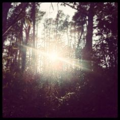 through the woods - my photography