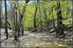 Memory Grove Dog Park in City Creek Canyon, Salt Lake City, Utah