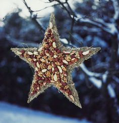 how to feed the birds in a nut covered star