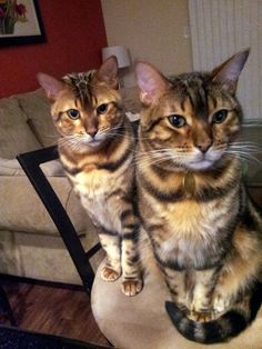 homemade-cat-food-recipe-1