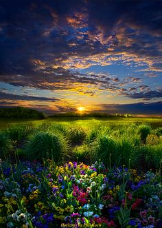Explore Phil~Koch's photos on Flickr. Phil~Koch has uploaded 2163 photos to Flickr.
