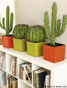 cactus pequeños para habitaciones