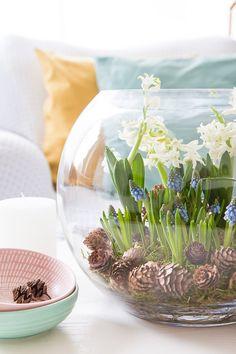 Frühlingserwachen - mit Blumenzwiebeln dekorieren