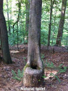 Natural toilet